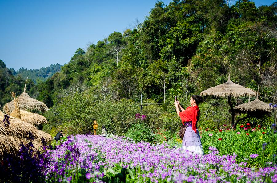 The Royal Agricultural Project, Doi Angkhang, Thailand