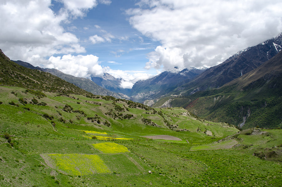 A vast space of green valley and yellow wild flowers